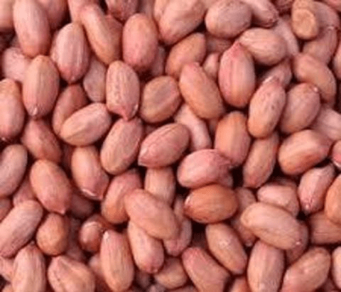 Fresh Raw Groundnuts