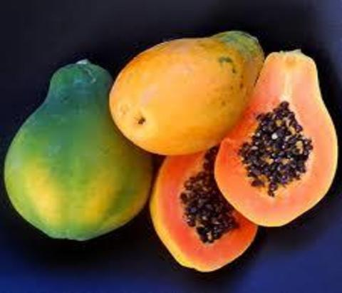 Pink Solo Pawpaw