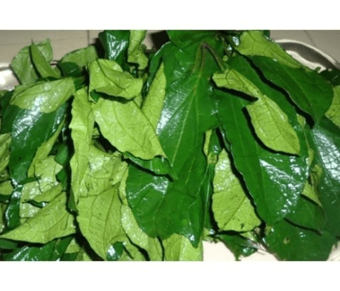 Ugwu Vegetable